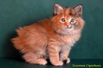 "Помет №91 ""Х"" 20.09.14. 7 котят."