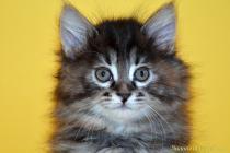 """Помет № 121 """"Я"""" от 19.01.16. 6 котят"""
