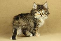 "Помет №93 ""Э"" 27.09.14. 5 котят."