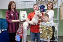 Продажа котят курильский бобтейл домашняя рысь
